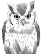 Elizabeth Porter Presents: Owl