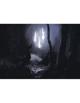 Quico Vicens Picatto Presents: Forest Ritual