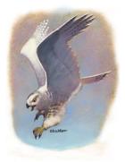 Eric Lofgren Presents: Diving Owl