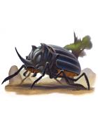 Eric Lofgren Presents: Giant Rhino Beetle
