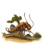 Eric Lofgren Presents: Giant Insect Earwig