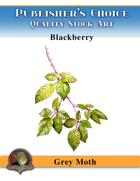 Publisher's Choice - Gray Moth -  Blackberries