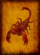 RPS Cards: Scorpion