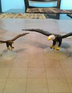 Eagle, Hawk and Vulture collection!